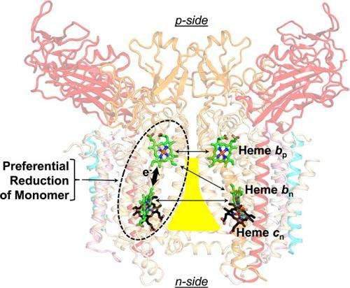 Fat molecules influence form and function of key photosynthesis protein