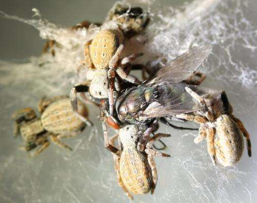 Spider DNA spurs search into arachnid secrets