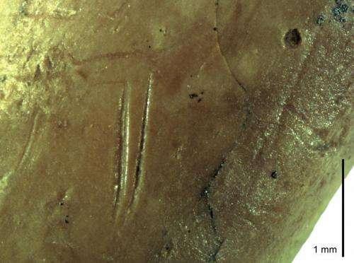 Ancient pigeon bones reveal secrets of Neanderthals' bird diet