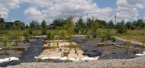 Filter bed substrates, plant types recommended for rain gardens