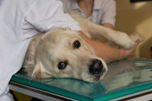 First cancer immunotherapy for dogs developed