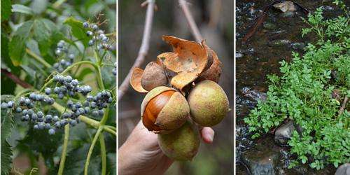 Foragers find bounty of edibles in urban food deserts