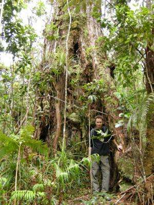 Forest model predicts canopy competition
