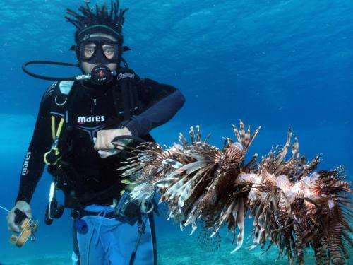 From despair to repair: Dramatic decline of Caribbean corals can be reversed