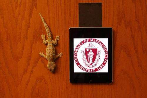 Gecko-like adhesives now useful for real world surfaces