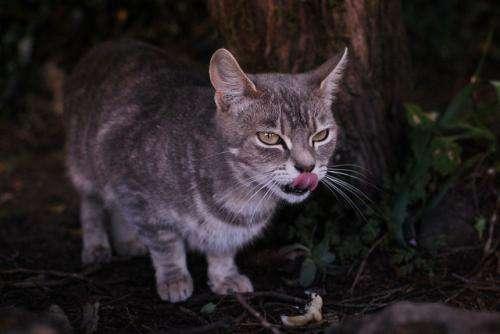 Genetics denote feral cat source