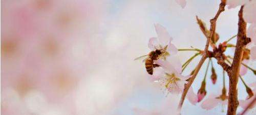 Global importance of pollinators underestimated