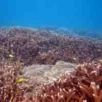 Great Barrier Reef coral cores reveal 2011 flood damage