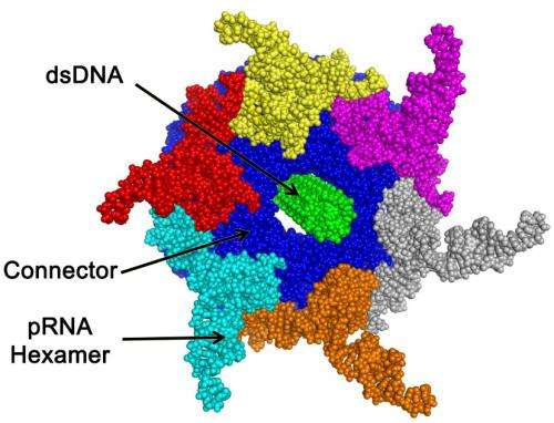 Guo Lab Reports Finding of Revolution Biomotors in Many Bacteria and Viruses