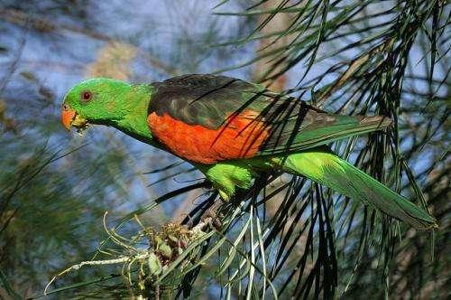 Haphazard reporting puts Australian parrots at risk