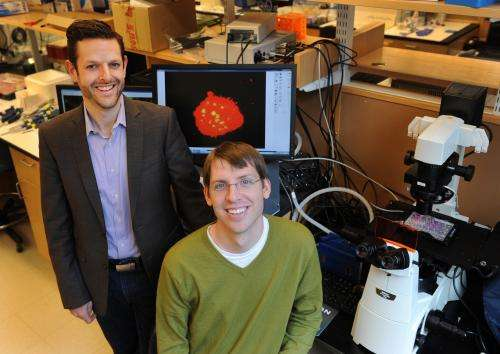 Harvard scientists control cells following transplantation, from the inside out