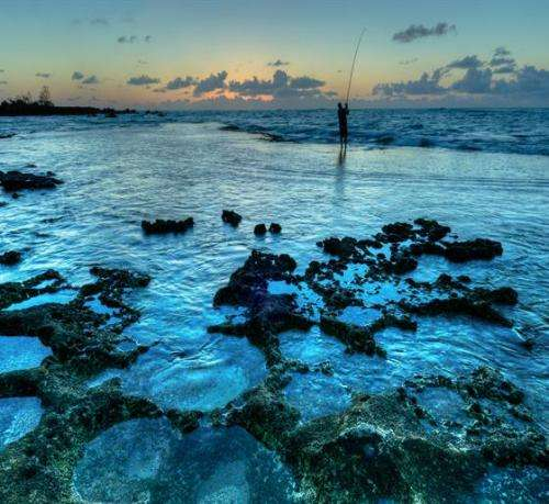 Hawaii-Reef-Health-Study-Finds-Two-thirds-Of-Hawaiian-Reefs-Are-Covered-With-Algae