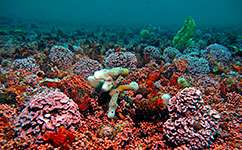 High-CO2 world threatens seabed life