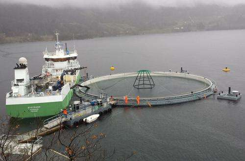 High survival rate for post-smolt in closed farming facilties