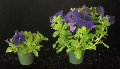 High tunnels found effective for finishing cold-tolerant annuals