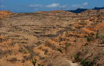 High-yielding crops are a double-edged sword for tropical forests