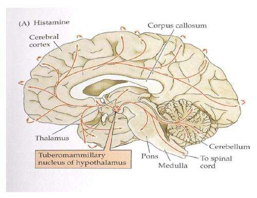 Histamine control of Tourette syndrome