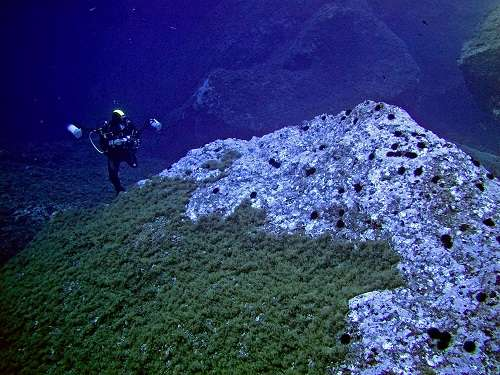 How can we avoid kelp beds turning into barren grounds?