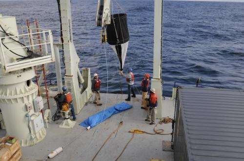 How do phytoplankton survive a scarcity of a critical nutrient?