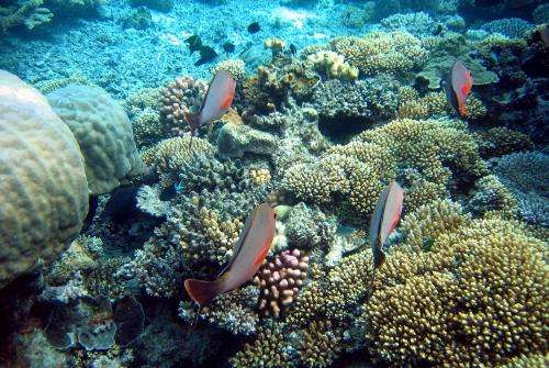 How the Great Barrier Reef survived colder temperatures