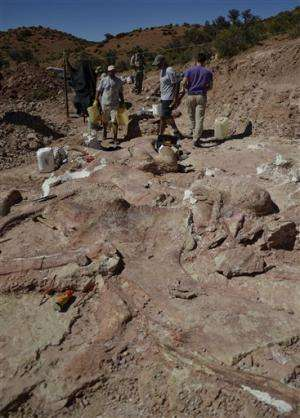 Huge femur in Argentina could be biggest dino yet