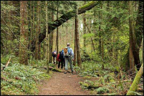 Human traffic threatens urban forests
