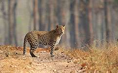 India's ancient mammals survived multiple pressures