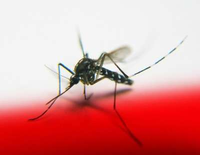 Infrared light puts malaria to the test
