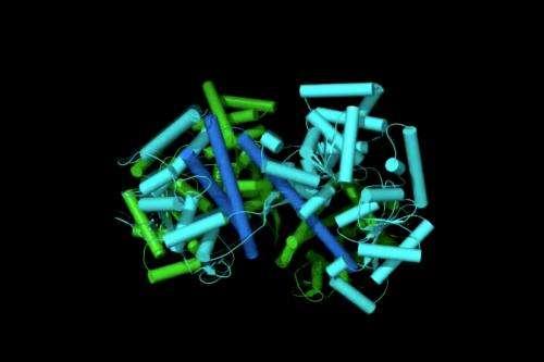 Inner workings of a cellular nanomotor revealed
