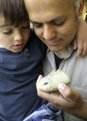 Insect expert's young son beats him to rediscovering endangered bug