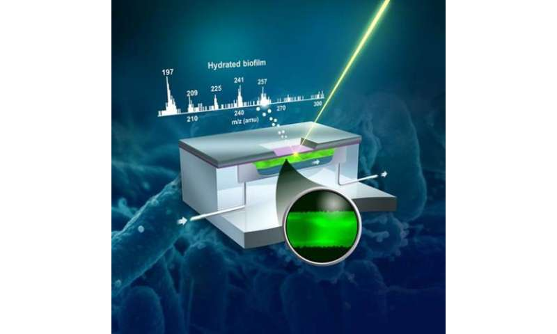 In situ chemical imaging at the sub-biofilm-scale now possible