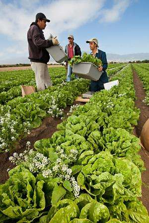 In the field, the right flower arrangement can improve organic pest control
