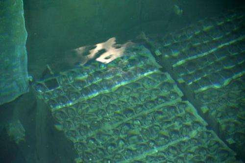 In this file photo, nuclear fuel rods are seen in the spent fuel pool at Tokyo Electric Power Co.'s Fukushima Dai-ichi nuclear p