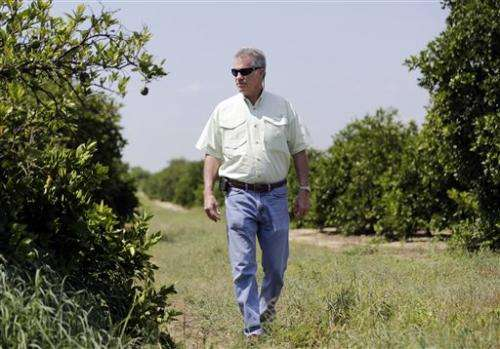 Invasive insect threatens iconic Florida citrus
