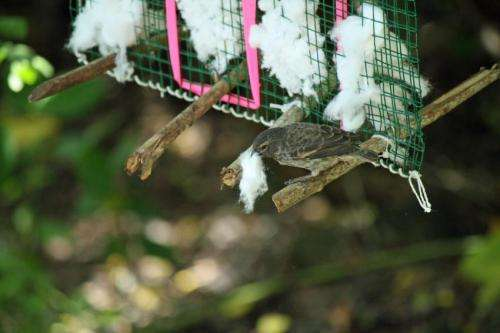 Is self-fumigation for the birds?