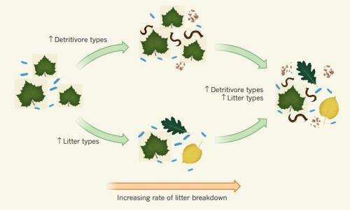 Field study suggests decreased diversity reduces liter decomposition rates