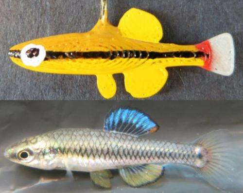 Judging a fish by its color: for female bluefin killifish, love is a yellow mate