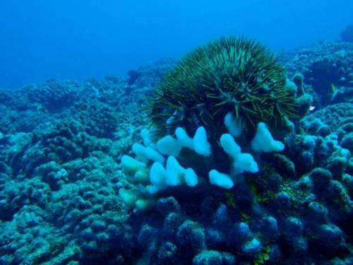 Scientists discover coral's best defender against an army of sea stars