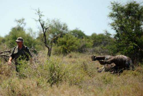 Kobus De Wet, an environmental crime investigator, walks past the carcass of a three-day-old rhinoceros killed by poachers at Ho