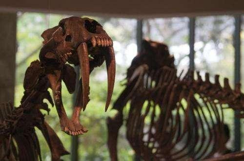 La Brea Tar Pit fossil research shows climate change drove evolution of Ice Age predators