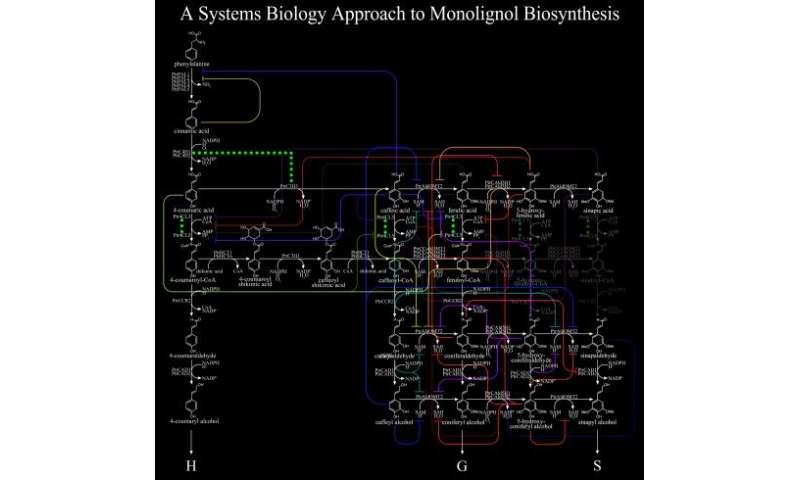 Lignin breakthroughs serve as GPS for plant research