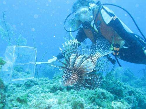 Lionfish analysis reveals most vulnerable prey as invasion continues