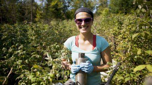 Logging destabilizes forest soil carbon over time, Dartmouth study finds