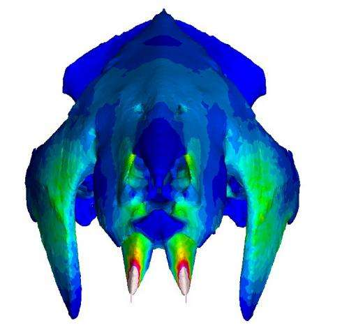 Madagascar: Fossil skull analysis offers clue to mammals' evolution