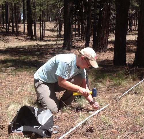 Managing water resources in forest restoration