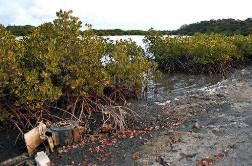 Mangroves, which absorb waves and are home to many threatened species, are being destroyed at more than triple the rate of land
