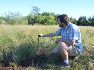 Mapping water management traits related to panic grass variants
