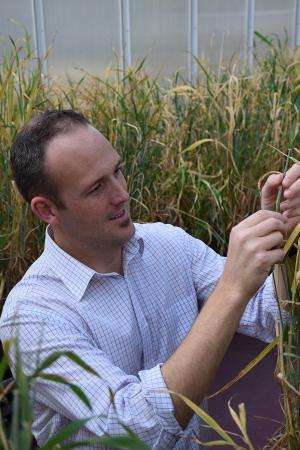 Fine-tuning plant cells for superior cereal crops