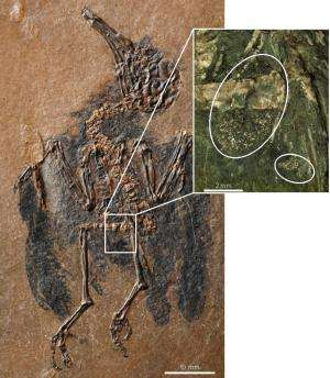 47 million year old bird fossil offers evidence of oldest known pollinator