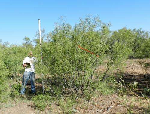 Mesquite a complementary biofuel feedstock